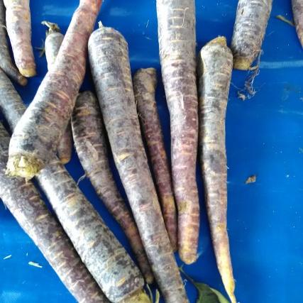 Black (purplish) carrots
